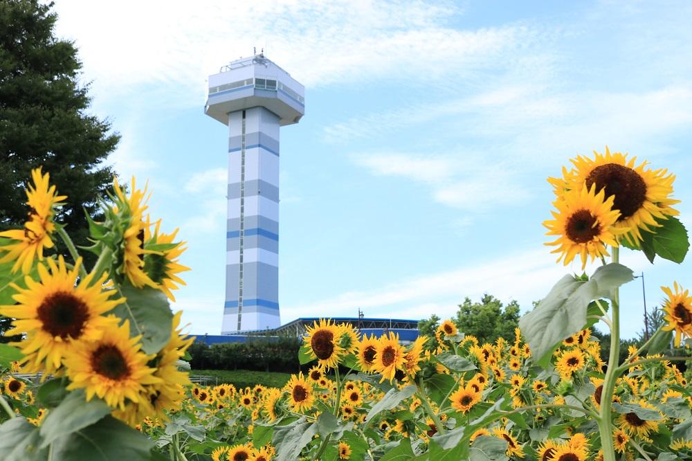 木曽三川公園センター 花絵花壇