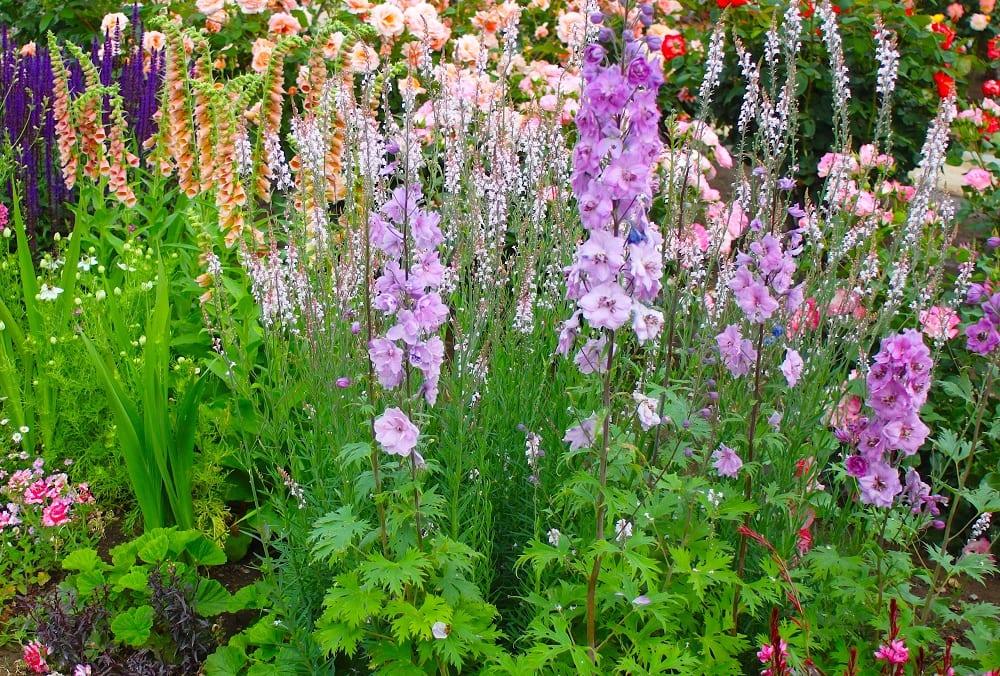 宿根草の開花風景