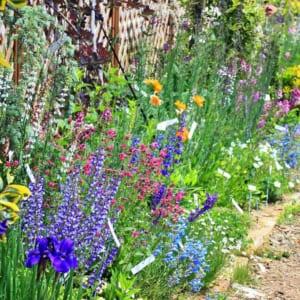 宿根草の花壇