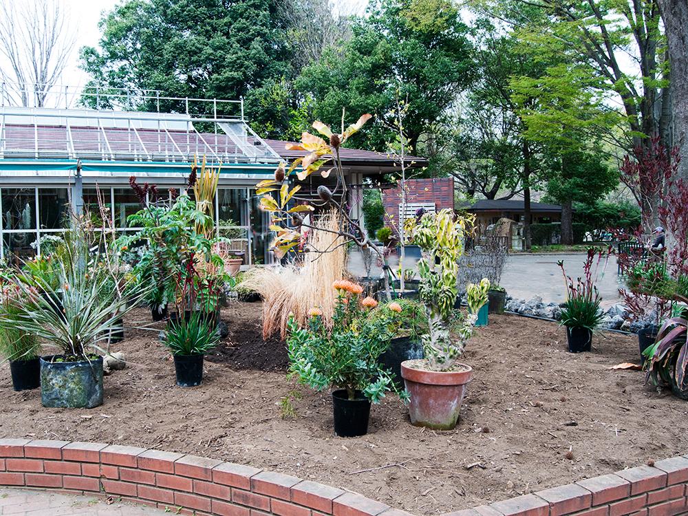 敷地内に植物を配置