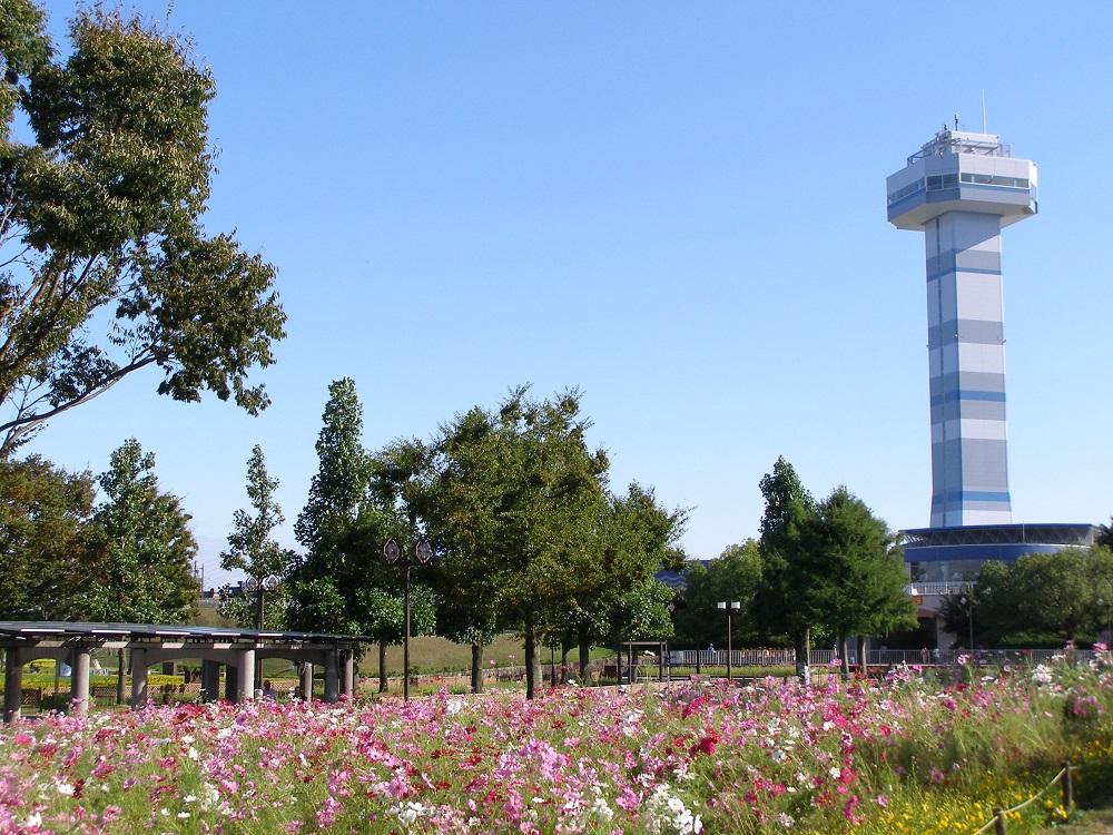 木曽三川公園センターのコスモス