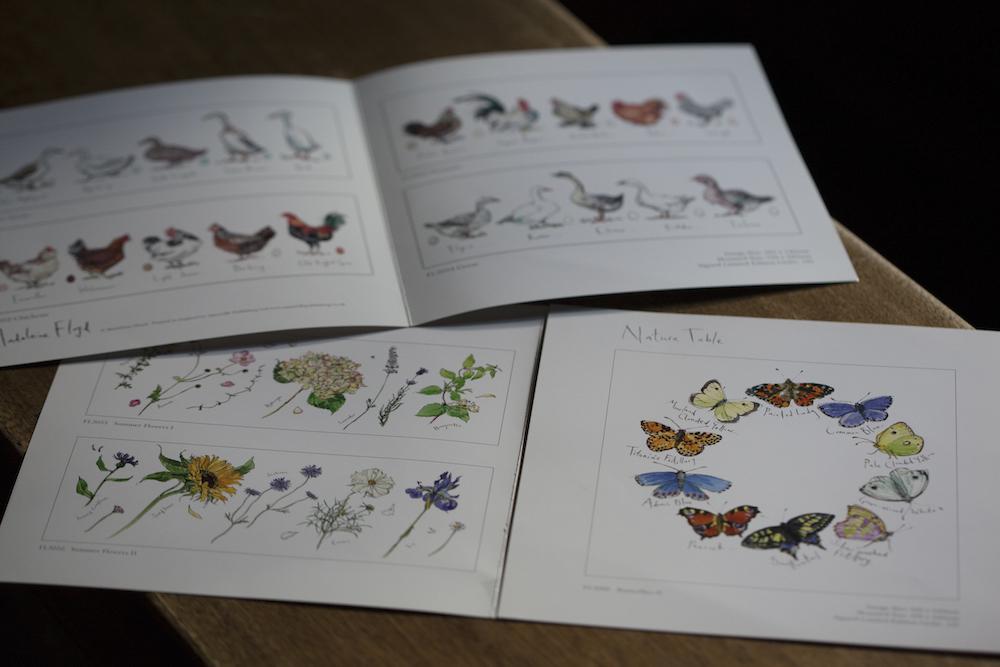 草花と蝶の絵のパンフレット