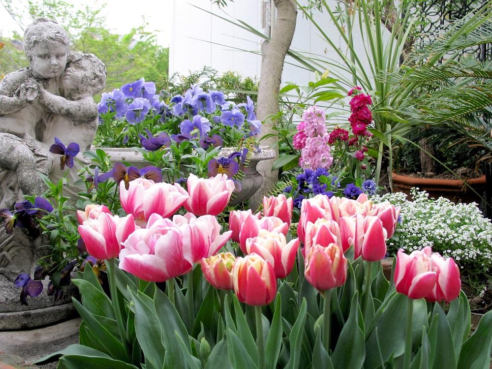 ガーデンに咲くチューリップ