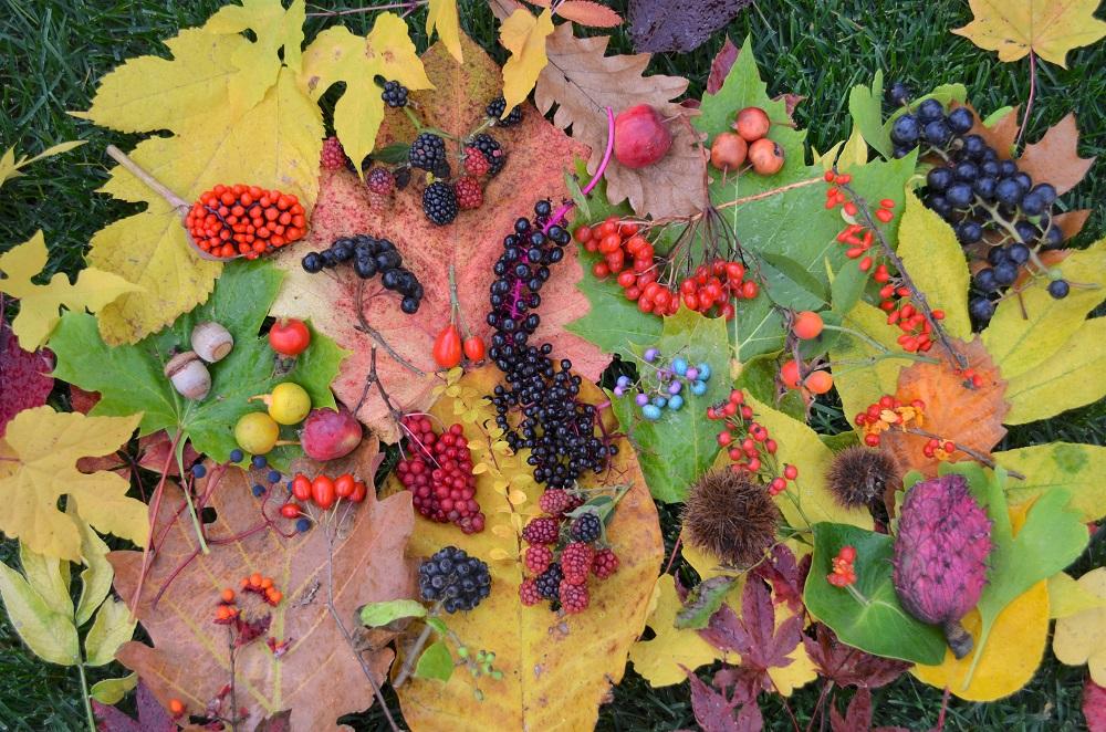 色鮮やかな秋の写真