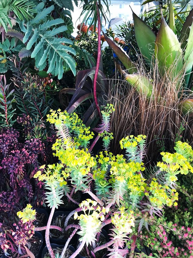 車に積み込まれた多数の植物