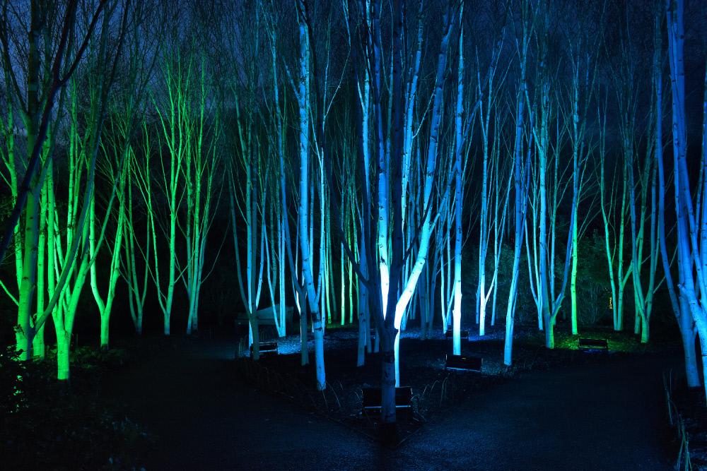 さまざまな色に照らされる木々