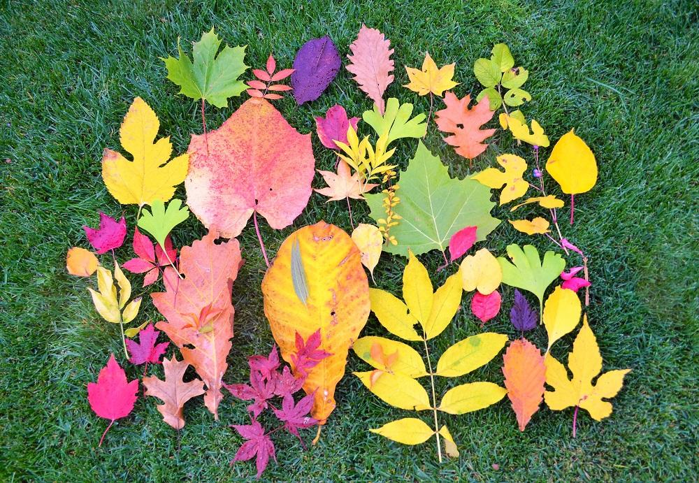 芝生に落ち葉を並べて