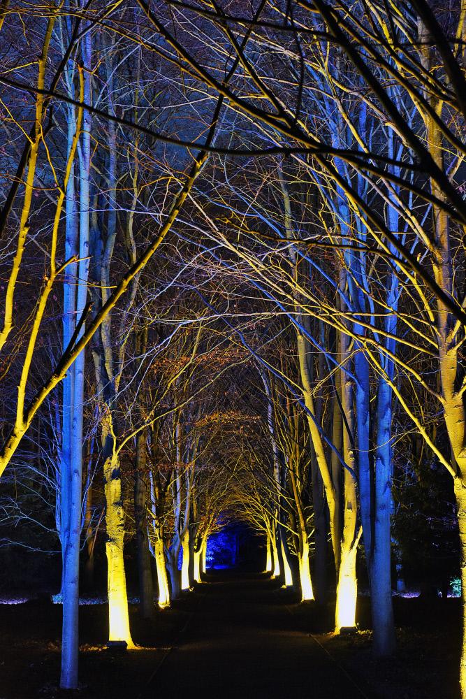 森の奥へ続く明かり