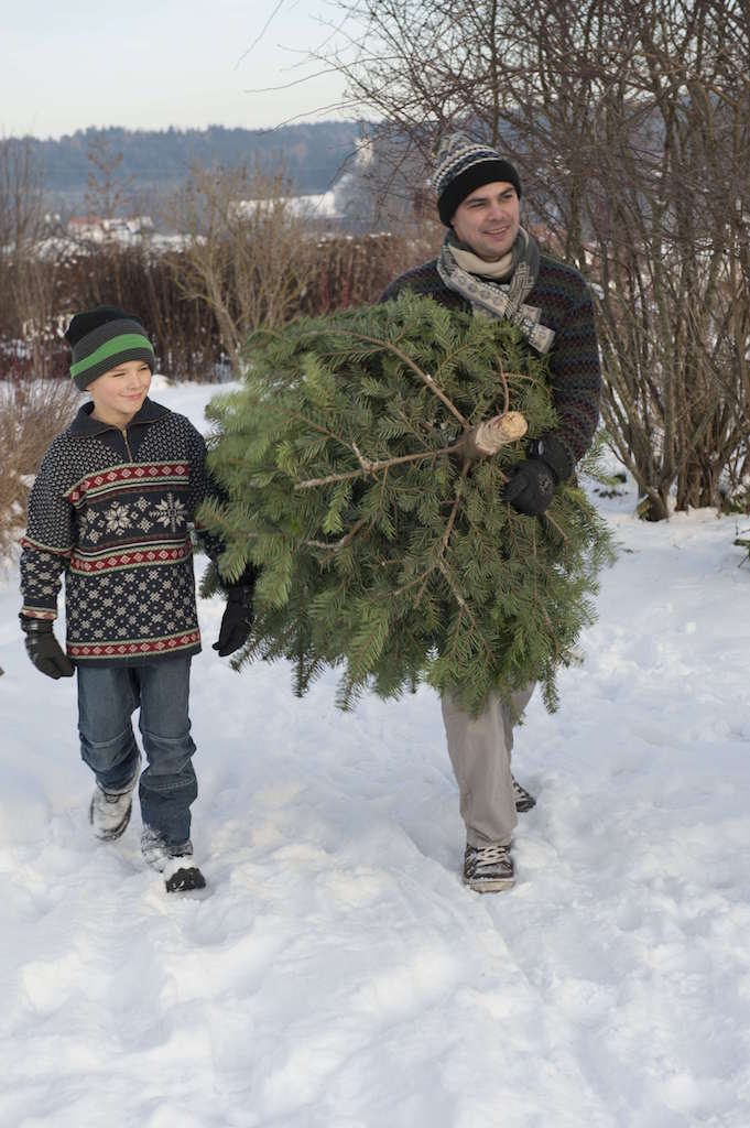 クリスマスツリーを切る