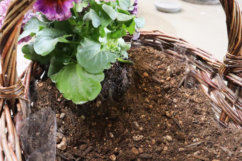 根鉢を固定