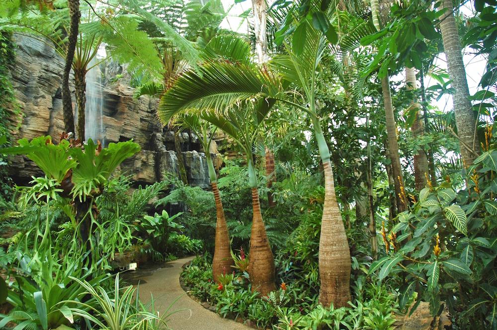新潟県立植物園のドーム型観賞温室