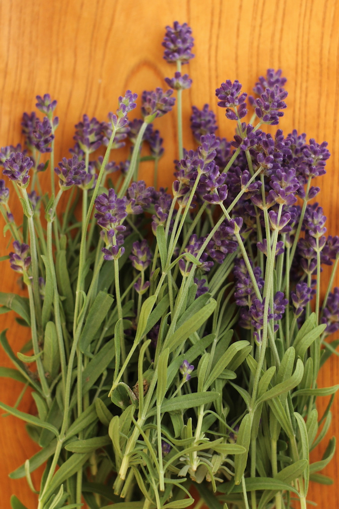 花粉症対策におすすめの精油:ラベンダー