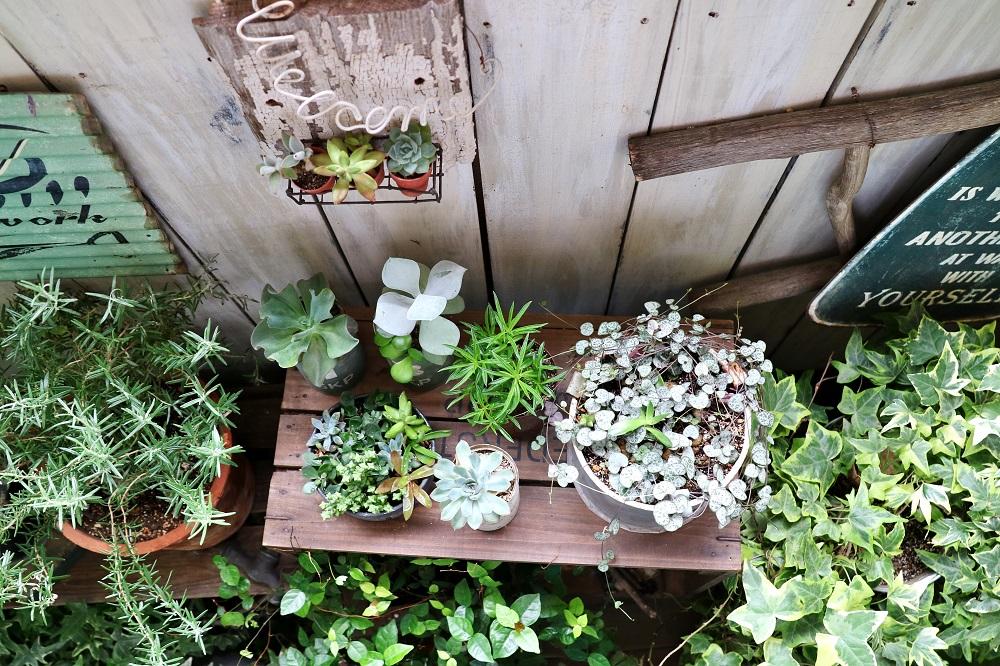 植物とアンティークで構成されたベランダガーデン