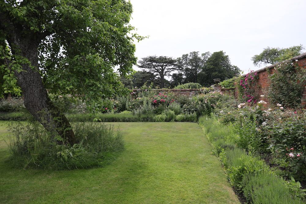 レンガ塀に沿った花壇には、ラベンダーとバラが植わる