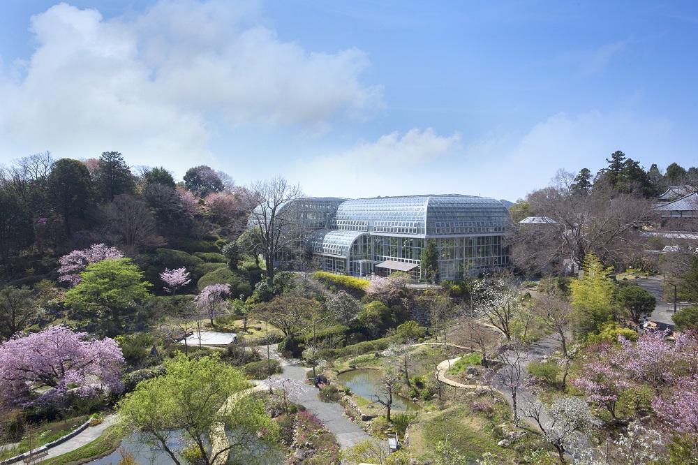 「高知県立牧野植物園」の春