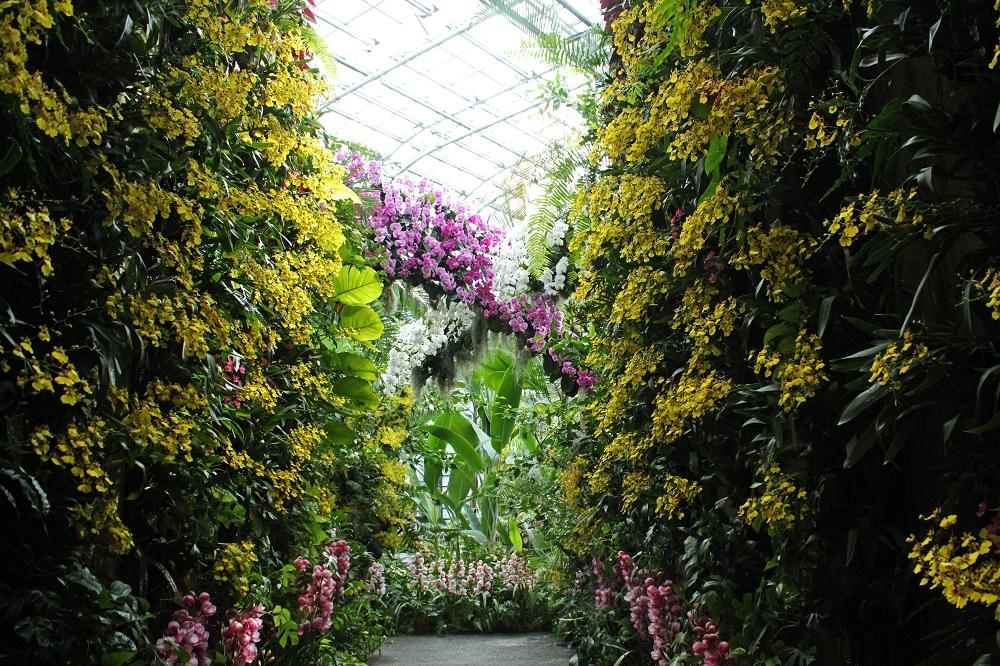 「高知県立牧野植物園」のラン展