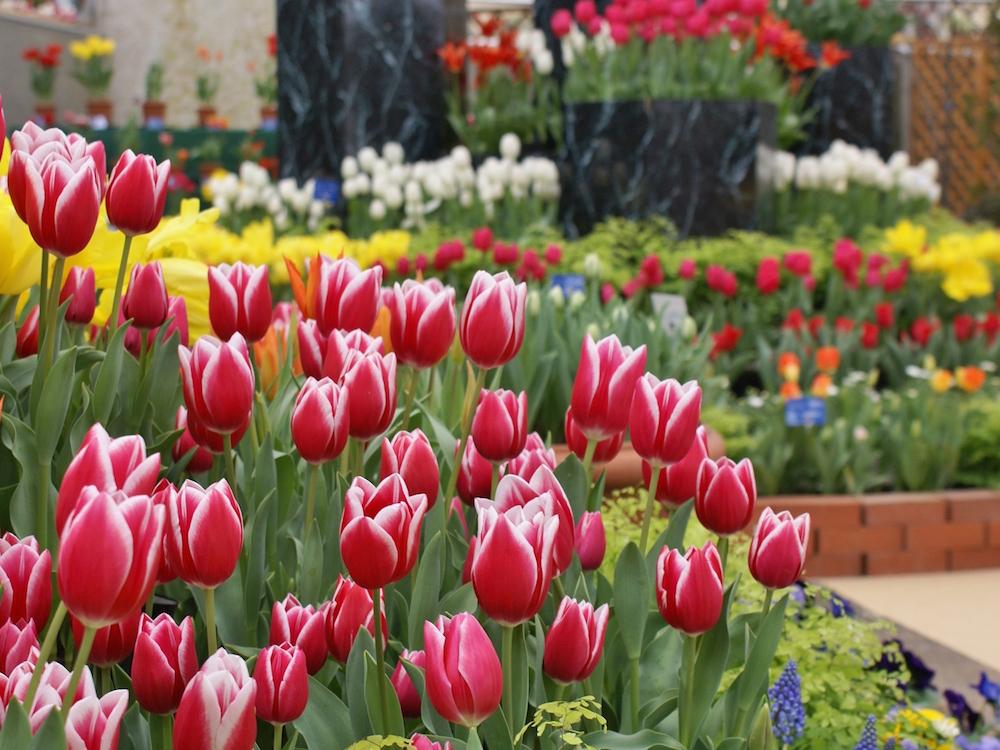 新潟県立植物園の温室