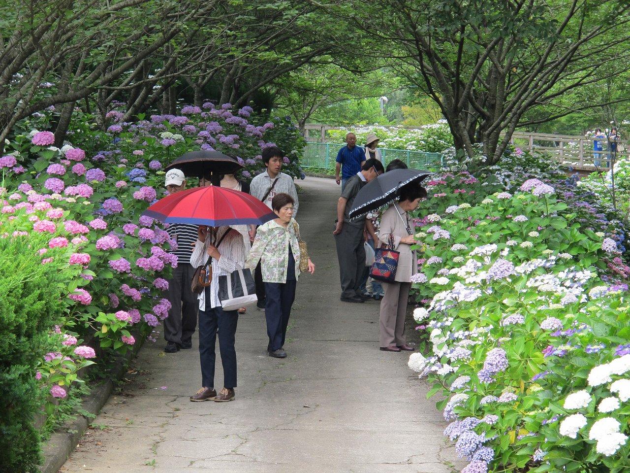 「和歌山県植物公園 緑花センター」あじさい園