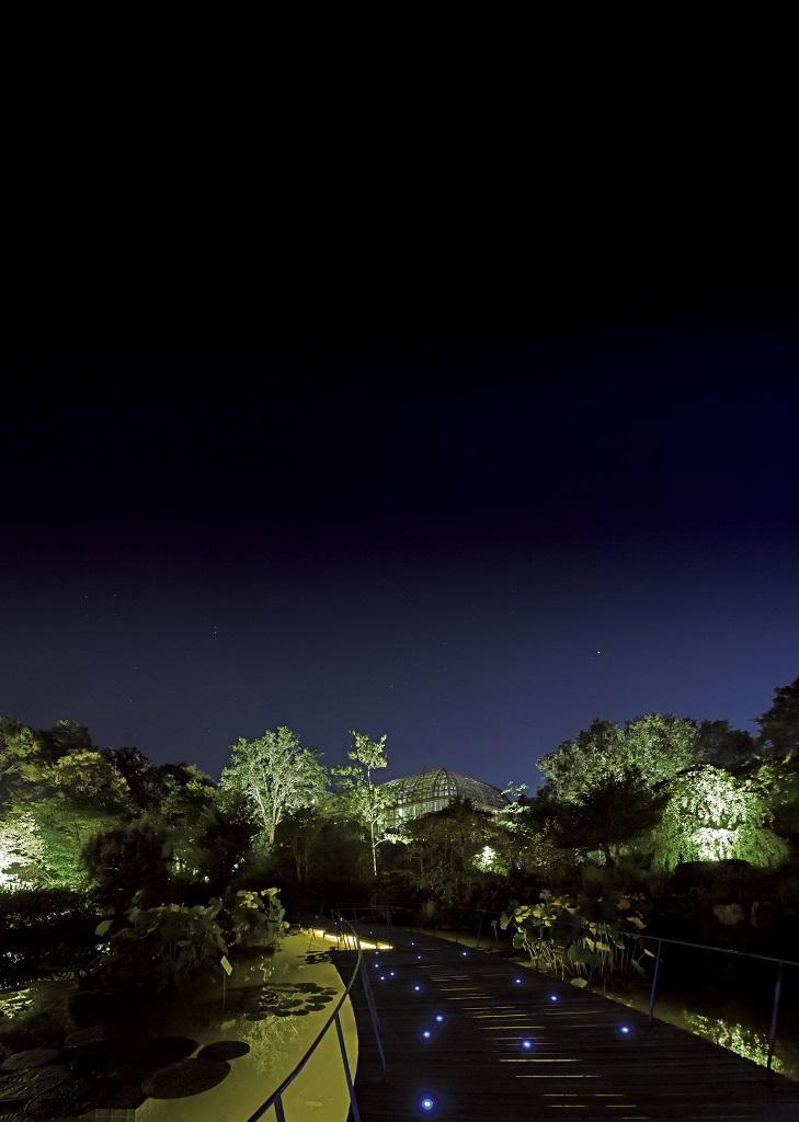 「高知県立牧野植物園」の夜間開園「よるまきの」