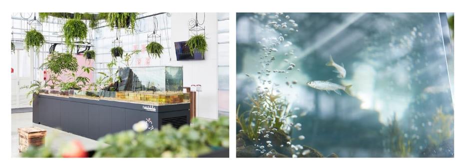 生き物のバランスと水の循環をつくり、魚と植物の育成を両立させる「アクアポニックス」。