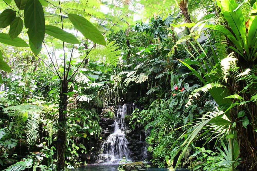 「高知県立牧野植物園」に育つ熱帯植物
