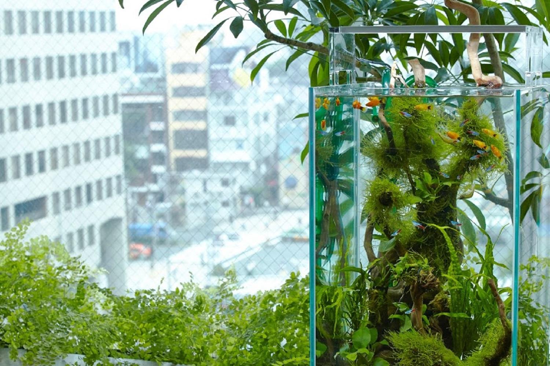 室内緑化に水を取り入れる
