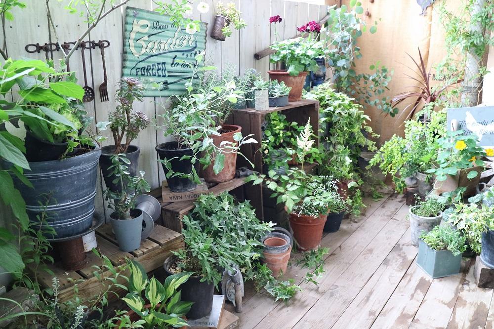 ベランダを彩る鉢植え