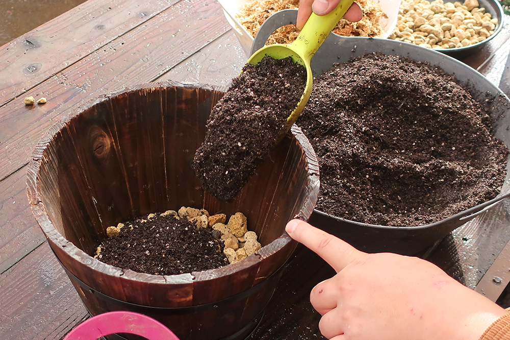 ジュリアンの寄せ植えの作り方-step2鉢の準備