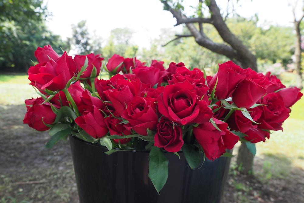 ROSE LABOが育てたバラ