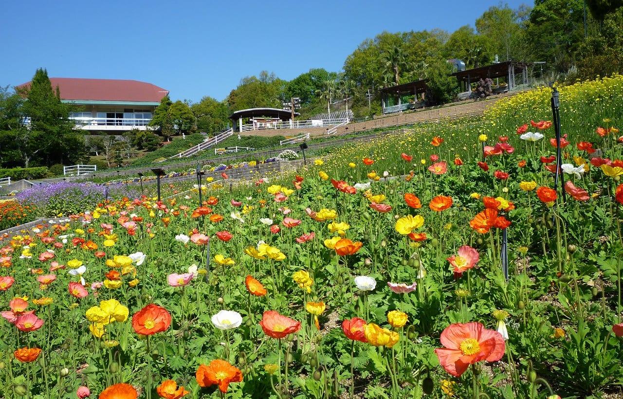 和歌山県植物公園 緑花センターのパノラマ花壇
