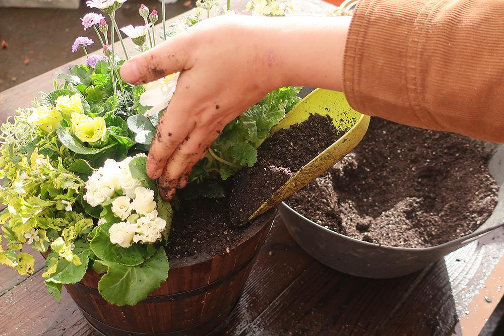 ジュリアンの寄せ植えの作り方-土入れ