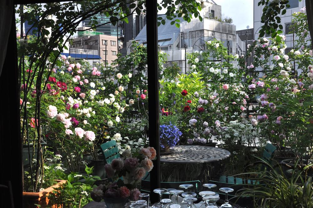 初夏のバラ咲くバルコニー