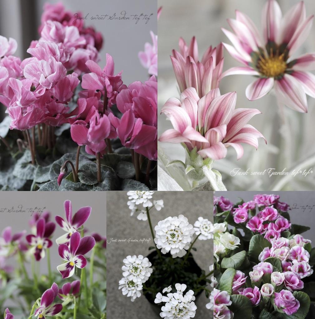 寄せ植えに使用した花