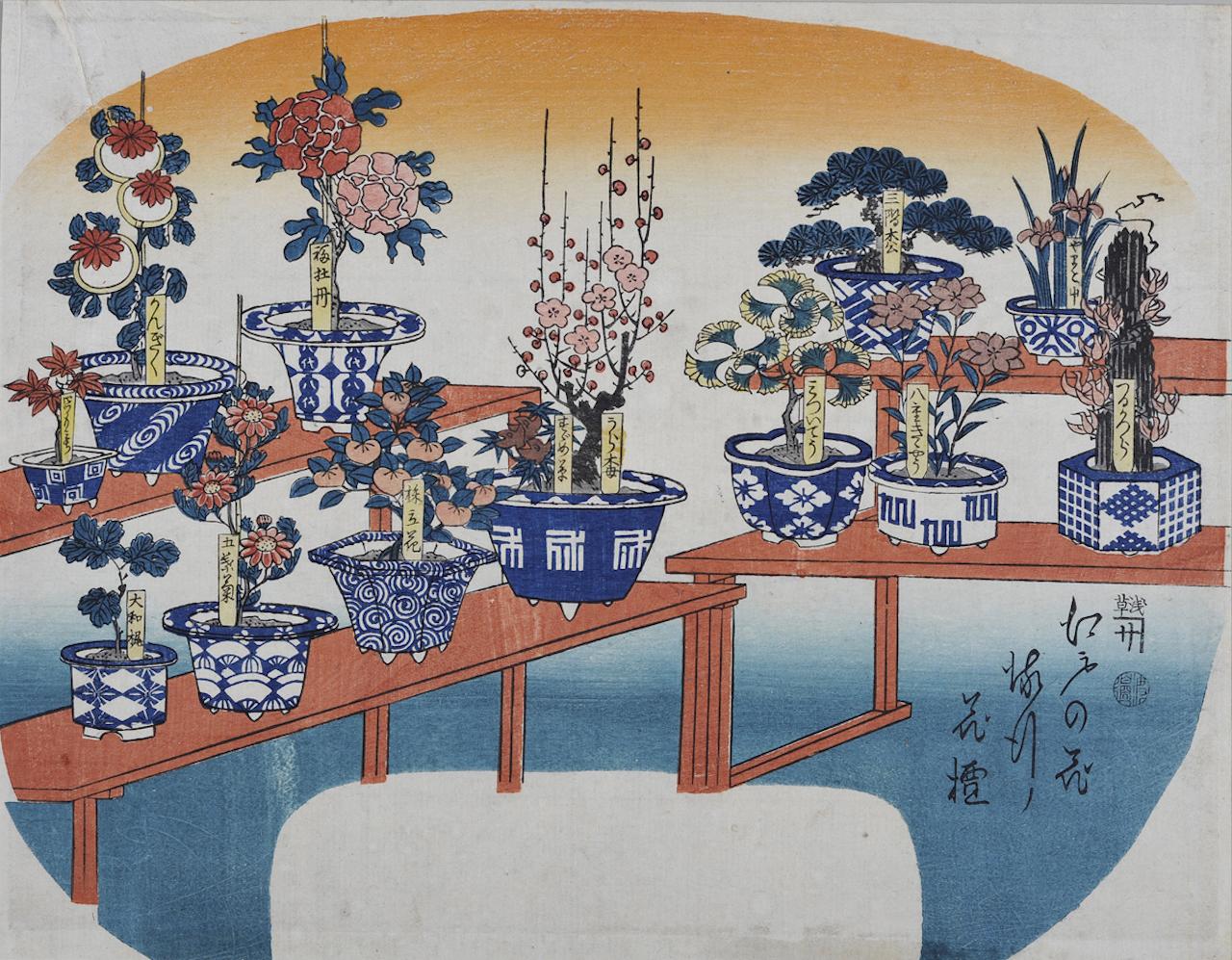 江戸の花流行花壇 浮世絵