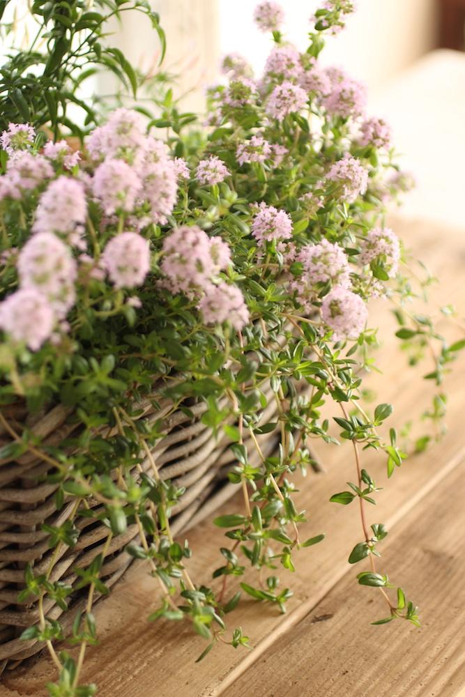 ガーデンセラピーとは、植物でできる自然療法の総称