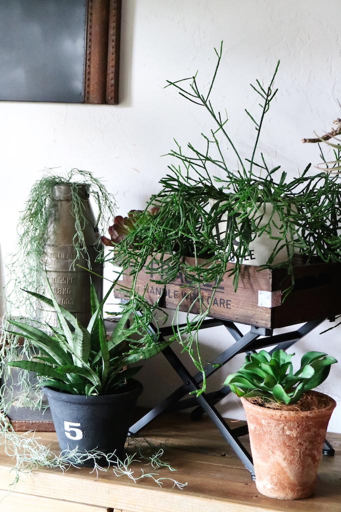 多肉植物のコーナー
