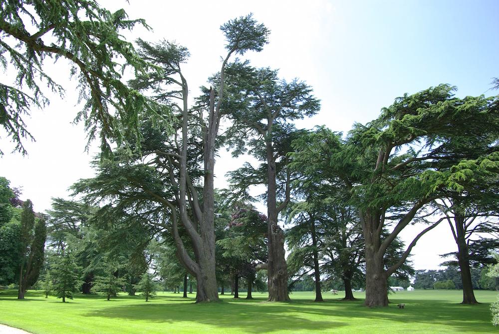 ブレナム宮殿の中の森 パイネータム