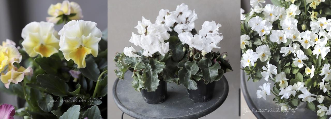 寄せ植えに使った花