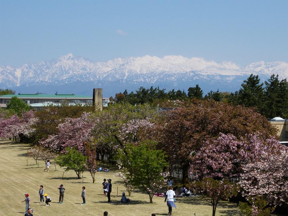 富山県中央植物園のサクラ