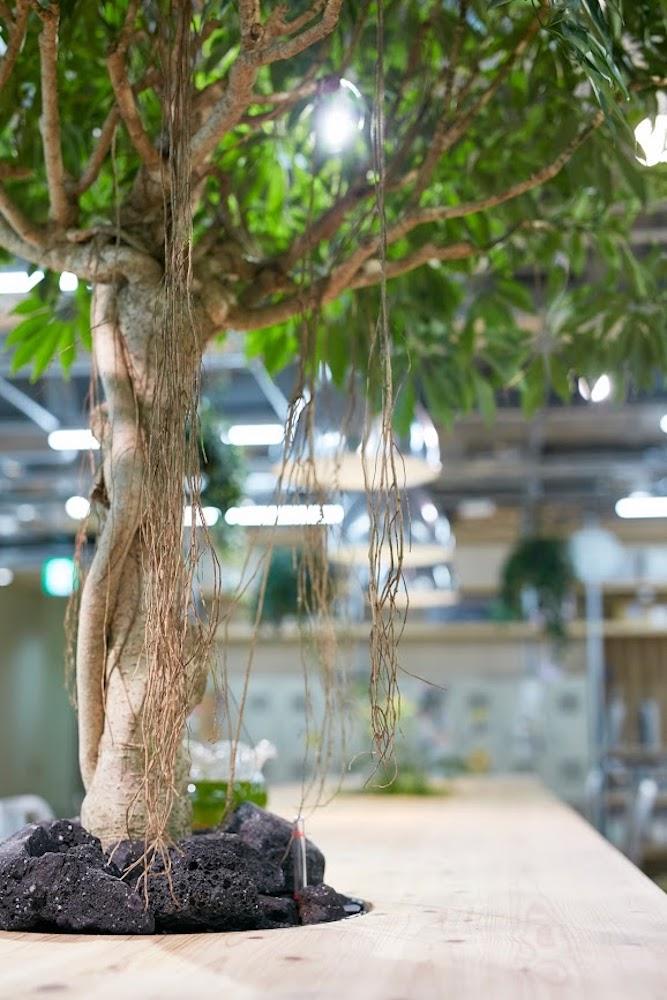 自然とともに生きる本能を、日常から生命力あふれる樹に触れることで呼び起こしてみませんか
