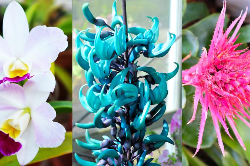 温室に咲く花