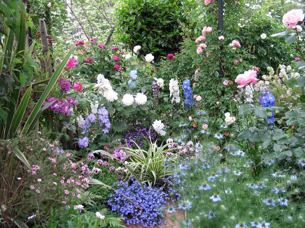ガーデンの花々
