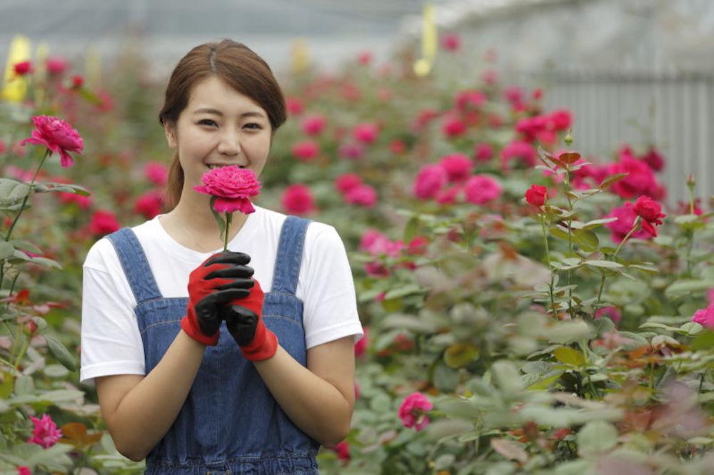 美にも健康にも嬉しい…食べられるバラの魅力と栽培方法[ROSE LABO通信 Vol.2]