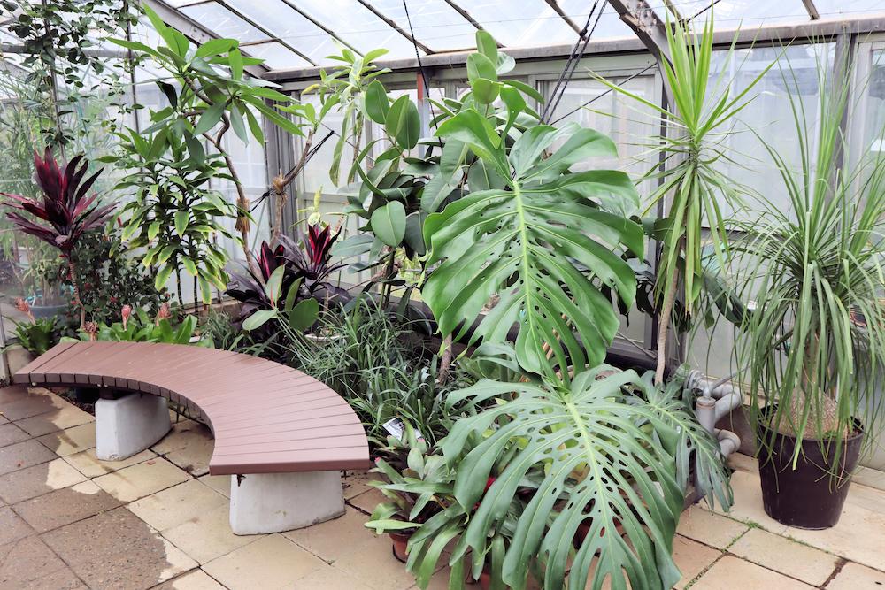 川崎市緑化センターの温室