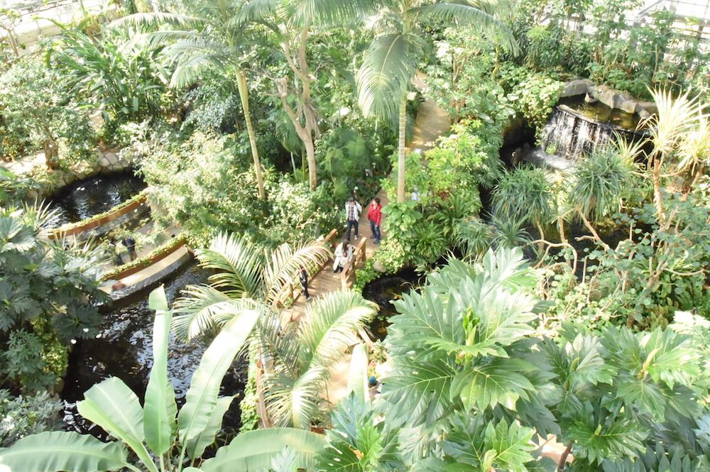 響灘緑地(グリーンパーク)熱帯生態園