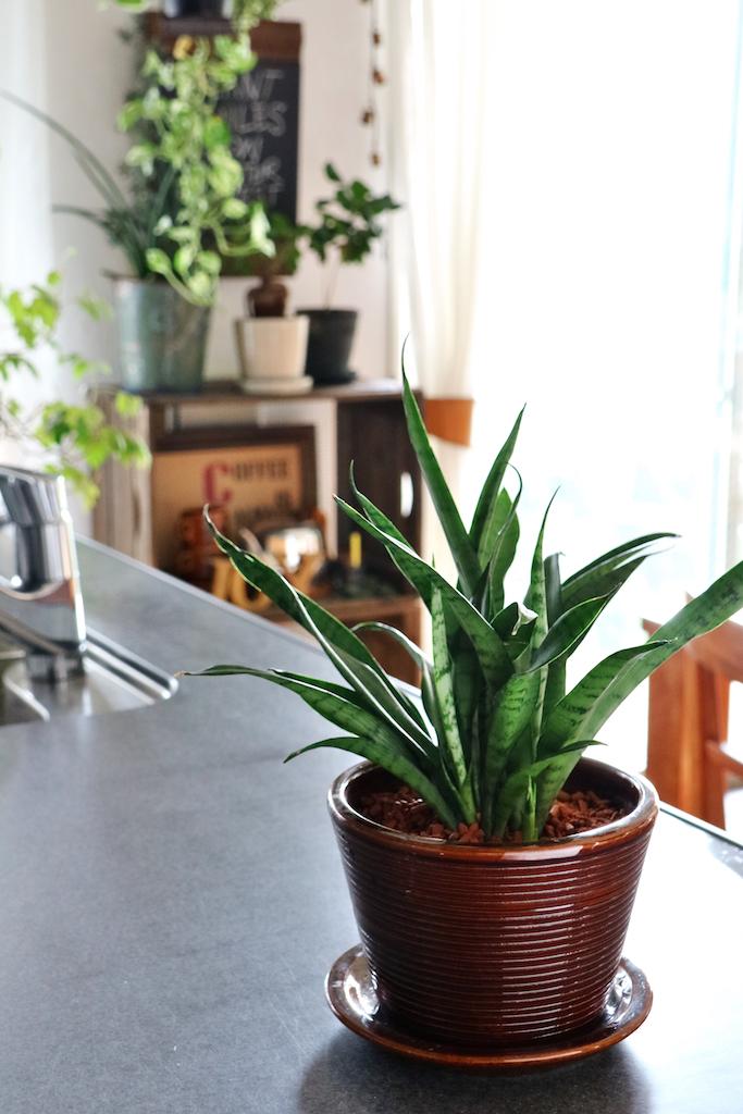 キッチンの上のグリーン