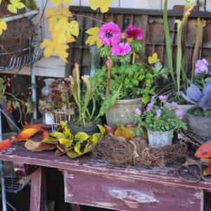 花と植物のおしゃれなディスプレイ