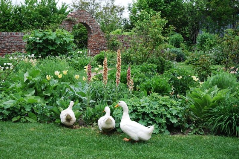 ガーデンとアヒル