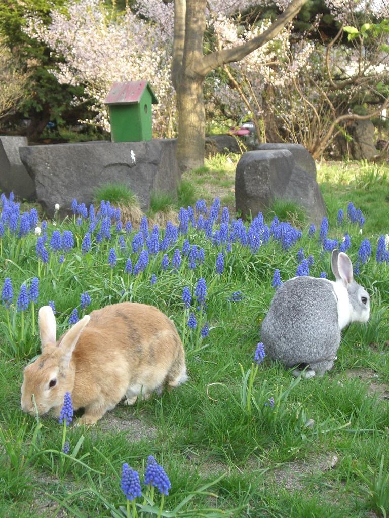 ウサギが遊ぶガーデン