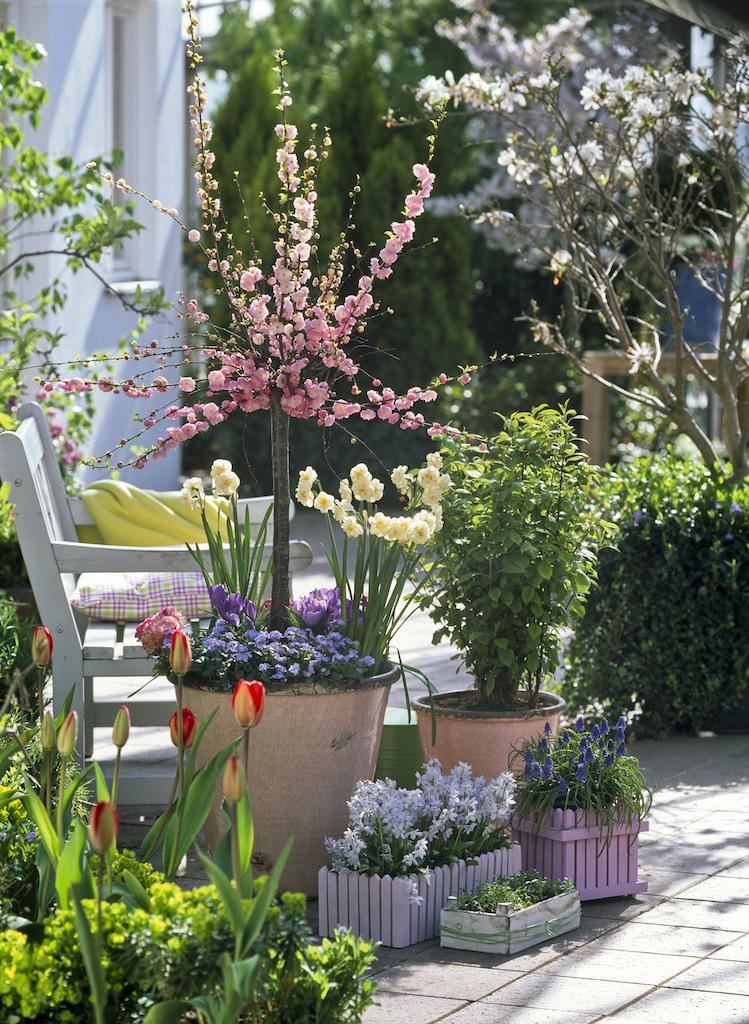 球根花と花木のコンテナ